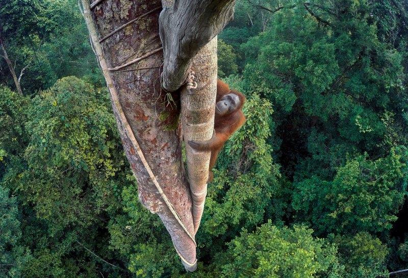 grandes-vencedores-wildlife-photographer-year-2016-conexao-planeta