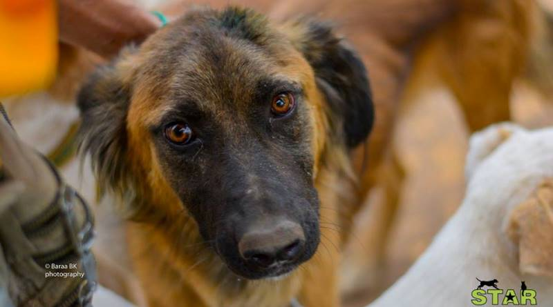 Abrigo trata animais feridos pela guerra da Síria