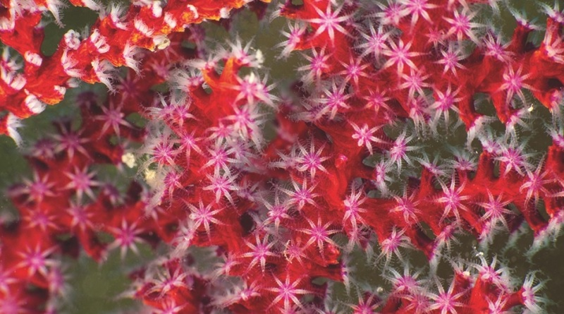 um-mergulho-virtual-com-o-projeto-coral-vivo-1