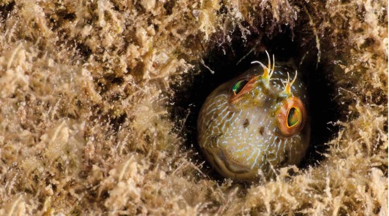 um-mergulho-virtual-com-o-projeto-coral-vivo-2