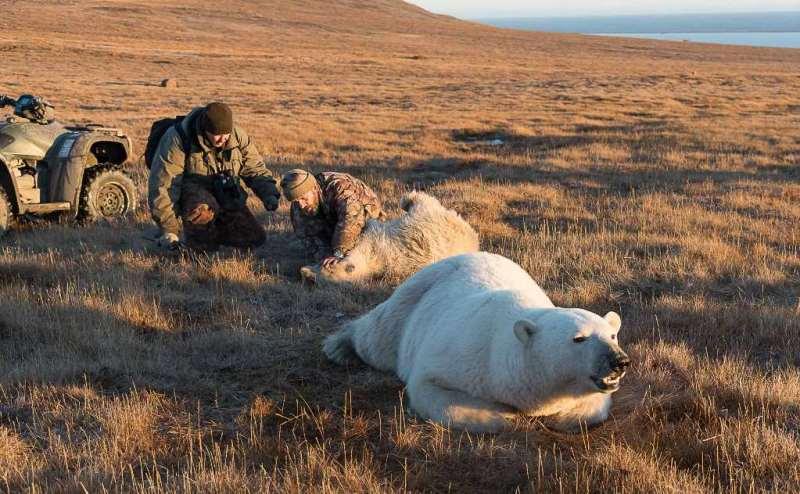 urso-polar-lata-boca-4-conexao-planeta