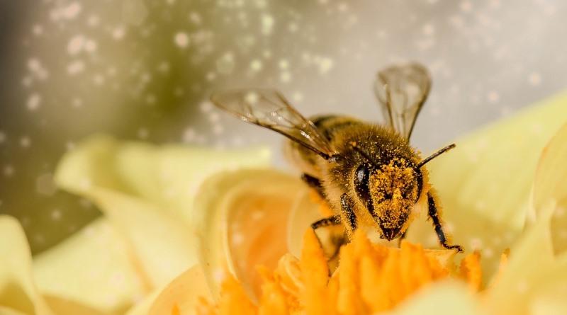 agrotóxicos e pesticidas