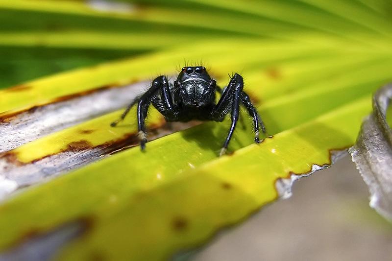 Eu, as aranhas-saltadoras e o universo!