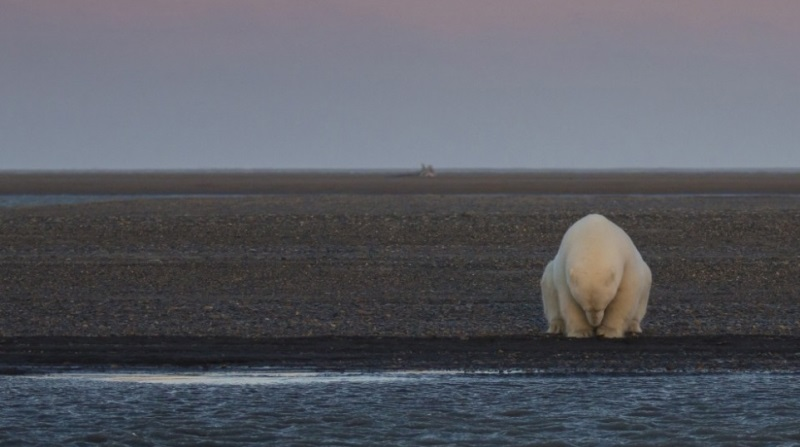 O impacto das mudanças climáticas em imagens
