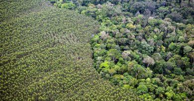 Florestas do Amapá correm risco de serem dizimadas por plantações de soja e eucalipto