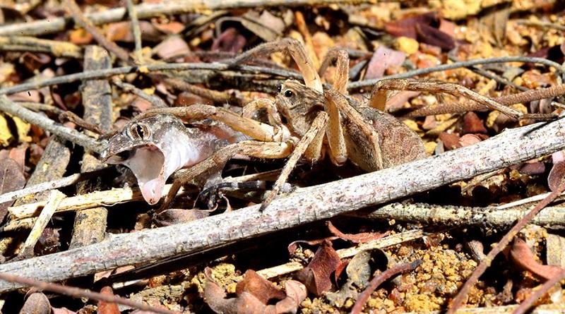 a vida, a lagartixa e a aranha