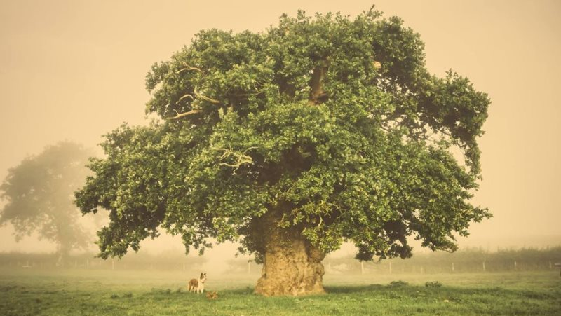 Miss Universo, que nada! Europa vai eleger a Tree of the Year 2017