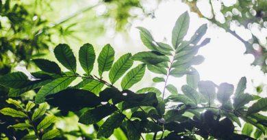 Brasil tem maior número de diferentes espécies de árvores do planeta