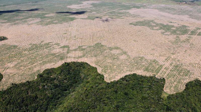 Brasil pode perder equivalente ao território de Portugal em áreas protegidas, alerta WWF-Brasil