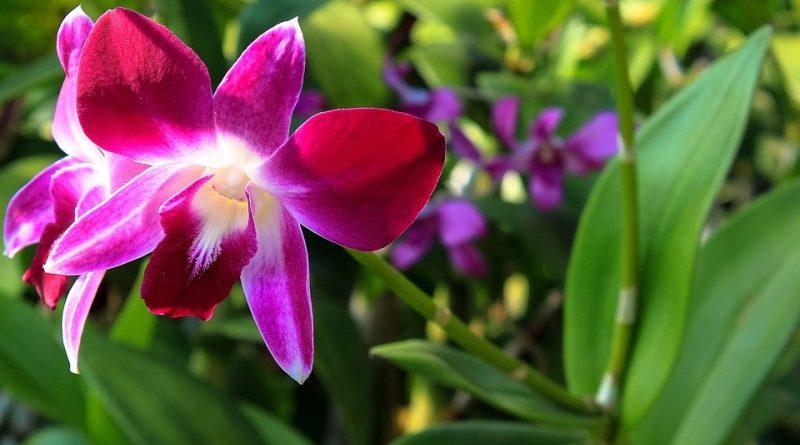 Paulistanos ganham exposição e oficinas gratuitas sobre orquídeas e bromélias no final de semana