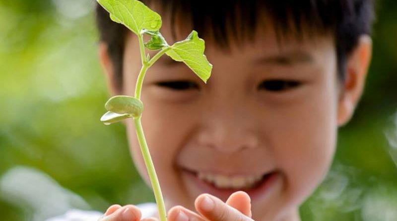 Sábado é dia de Mutirão de Plantio na Floresta da Tijuca. Participe!!!