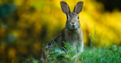 #AnvisaPoupeVidas: ajude a evitar a morte de milhares de animais em testes de agrotóxicos