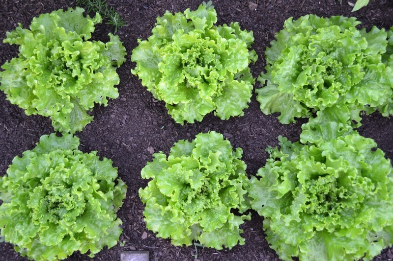 Projeto Horta na Laje estimula cultivo de hortaliças e alimentação saudável em Paraisópolis