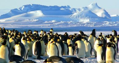 happy feet vai dançar: emperadores pinguins ameaçados