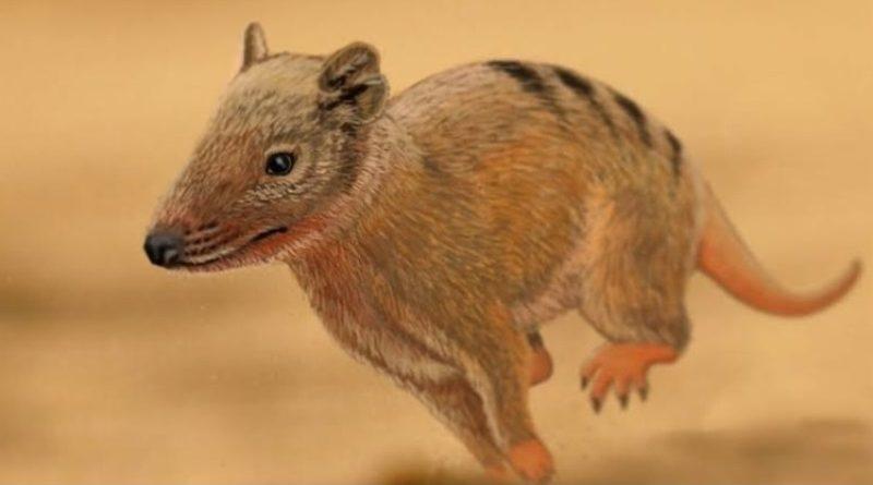 Pequeno mamífero deixa pegadas Brasilichnium enquanto galopa em duna do deserto Botucatu há 140 milhões de anos (ilustração: Aline Ghilardi