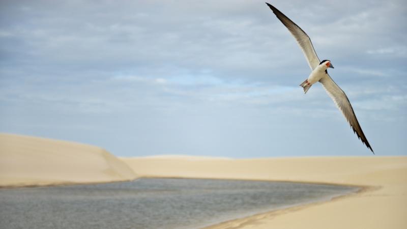 Concurso vai premiar melhores fotografias da natureza brasileira