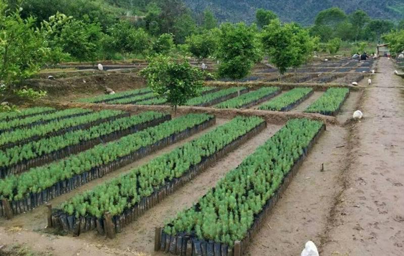Paquistão planta 1 billhão de árvores para combater mudanças climáticas