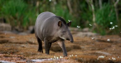 Conexão Planeta lança o 1o Concurso de Fotografia de Animais. Participe!