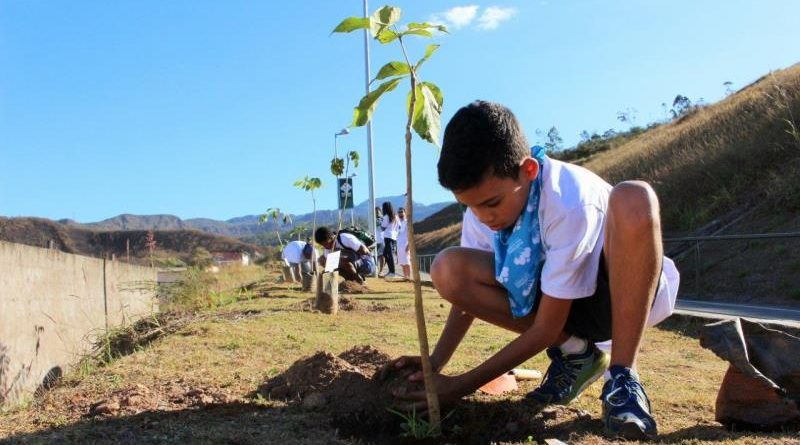 Crianças começam plantio de 1 milhão de mudas nativas ao longo do Rio Doce