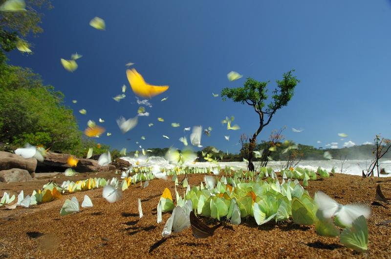 As borboletas do rio Juruena