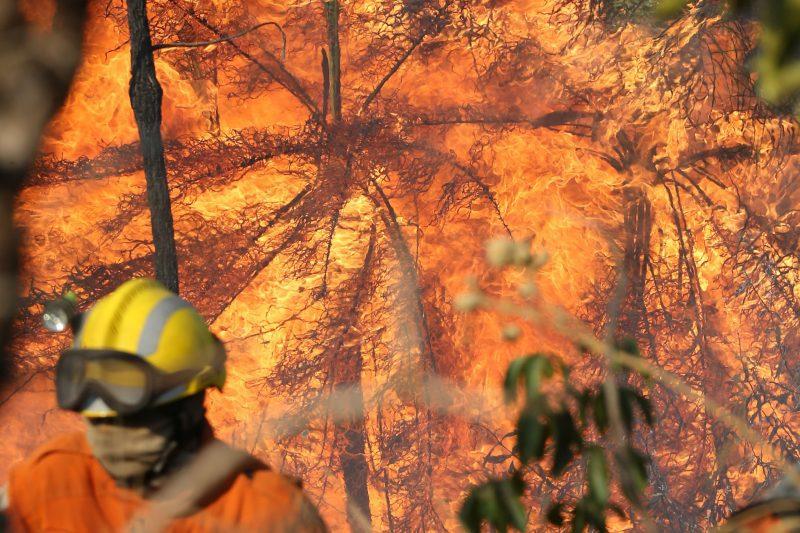 brasil e indonesia foram países que mais contribuiram para perda da cobertura florestal em 2016