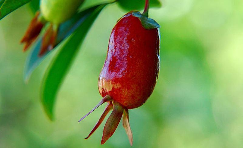 frutas exóticas da Mata Atlântica