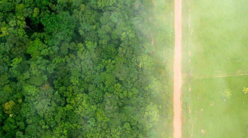 Brasil anuncia plano de recuperação de florestas