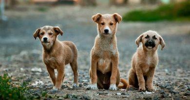 Domingo tem evento de adoção de animais em São Paulo