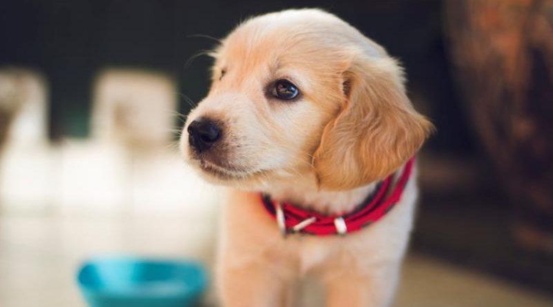 Donos de cachorros têm menos chances de ter doenças cardiovasculares