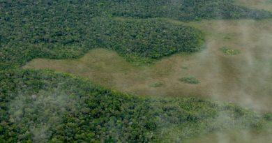 Monitoramento do desmatamento da Amazônia é ameaçado por cortes no orçamento