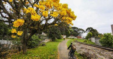 Programa Adote uma Árvore estimula curitibanos a tornar a cidade mais verde