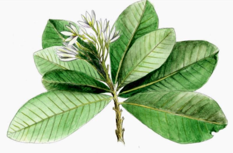 Resultado de imagem para plantas
