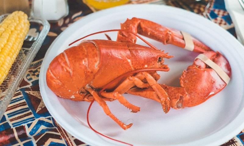 Suíça proíbe o cozimento da lagosta viva