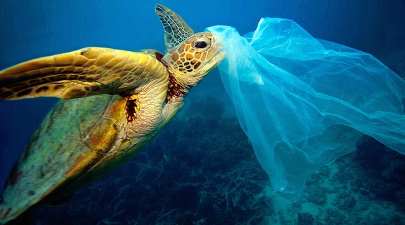 Ao confundir plástico por água-viva, tartarugas encontram a morte