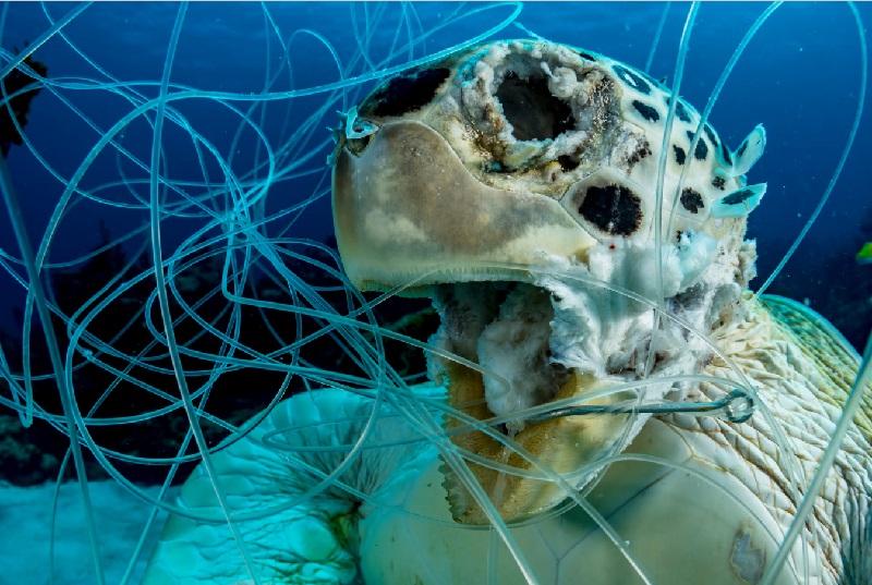Fotógrafos do mundo inteiro se reúnem no Instagram e Facebook em alerta sobre a extinção em massa dos animais