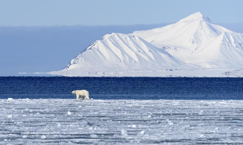 Temperatura no Ártico está 20oC e 30oC acima do normal