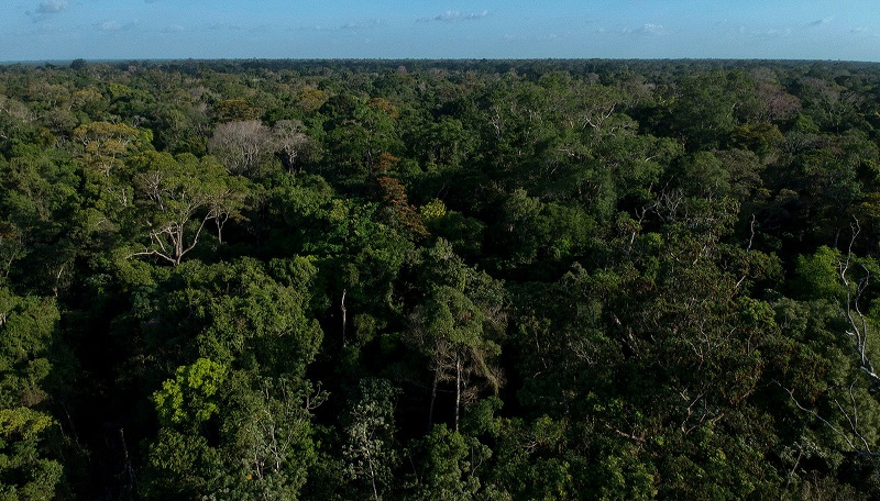 Após criação de 11 Unidades de Conservação em Rondônia, Assembleia Legislativa anula decretos