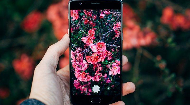 Novo aplicativo de fotos identifica espécies de plantas e animais