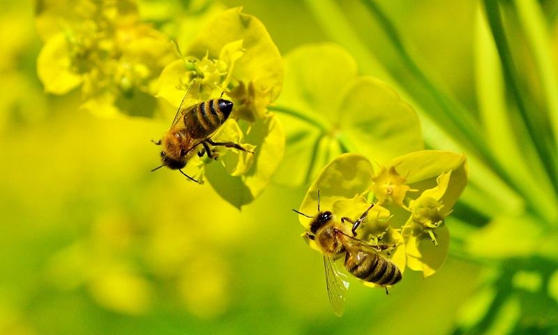 """Amsterdam registra aumento da população de abelhas graças a projetos """"bee friendly"""""""