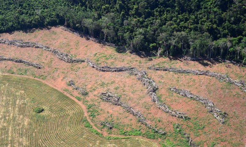 Desmatamento na Amazônia em abril é 84% maior do que mesmo período do ano passado
