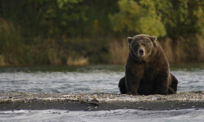 Trump muda regras para caça e volta a permitir métodos cruéis contra ursos e lobos