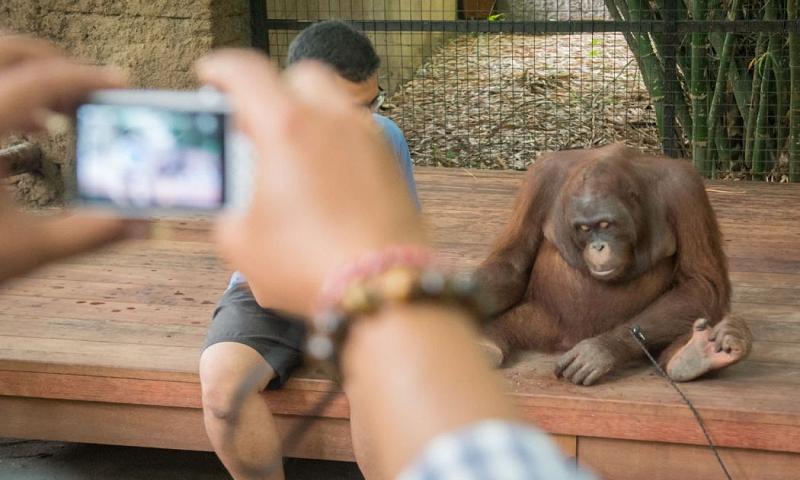 Animais de atrações turísticas de Bali sofrem abusos e maus-tratos, denuncia organização internacional