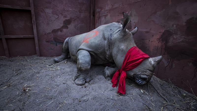 Vencedores da categoria Meio Ambiente do World Press Photo revelam imagens estarrecedoras
