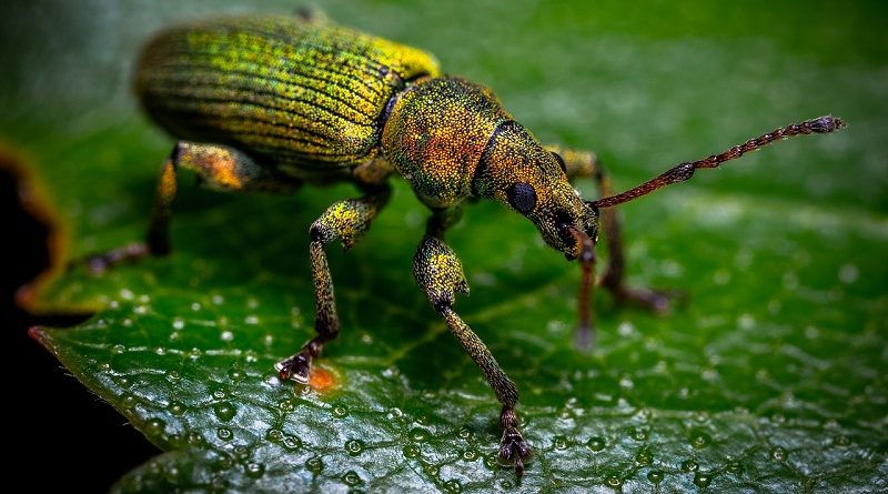 Mais de 26 mil espécies estão em risco de extinção, revela nova lista vermelha da IUCN