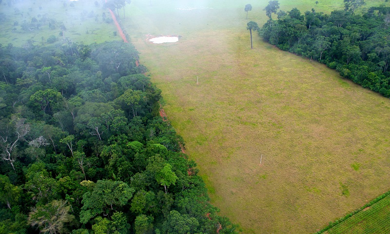Desmatamento na Amazônia em julho é 27% maior do que mesmo período do ano passado