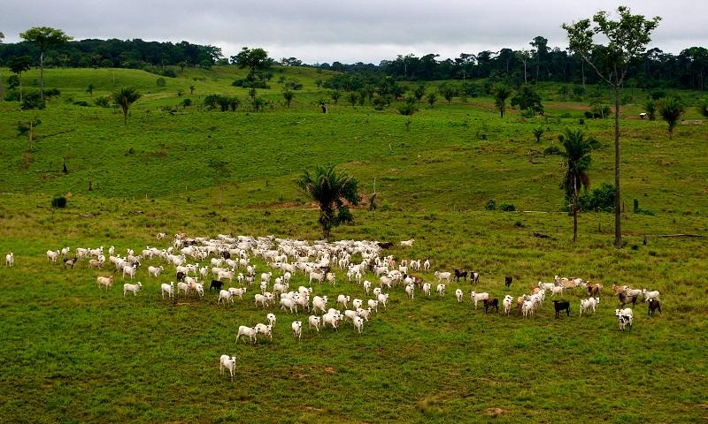 Dinheiro que financia soja, pecuária e consequente desmatamento na Amazônia vem de paraísos fiscais