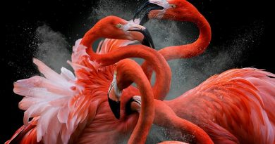 Flagrantes (incríveis) dos vencedores do Bird Photographer of the Year 2018