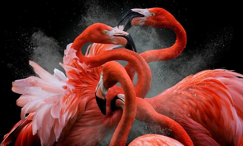 Flagrantes (incríveis) dos vencedores do Bird Photographer of the Year 2018