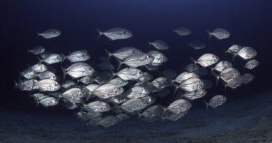Impacto do homem atinge praticamente todos os oceanos do planeta