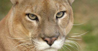 caça mata a nossa biodiversidade